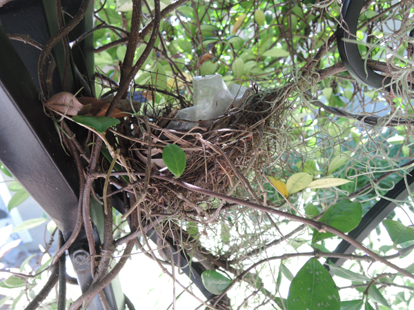 0916_bird_nest_web